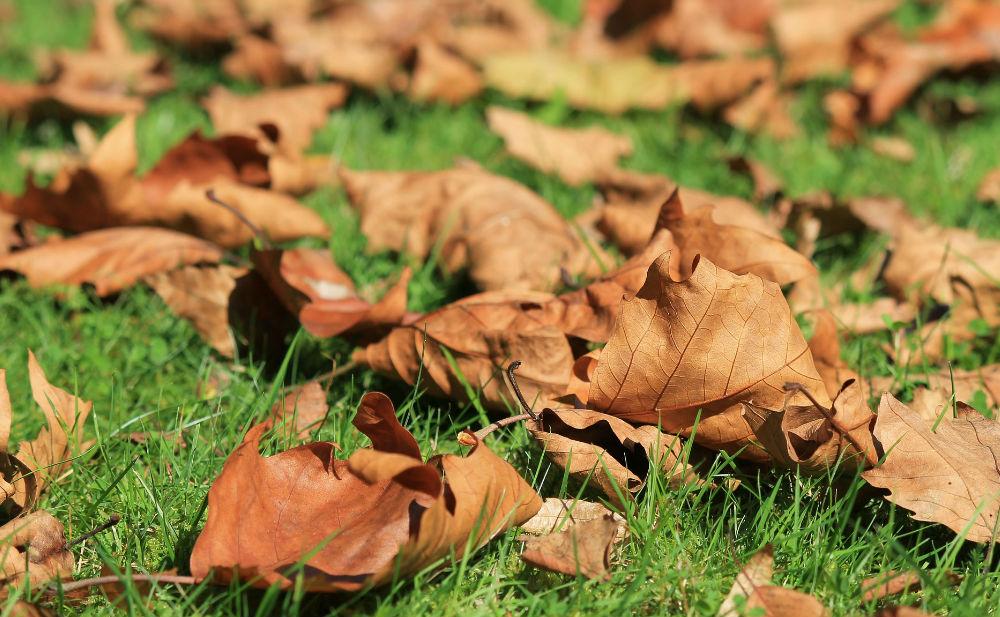 Viajar en otoño, una experiencia inolvidable